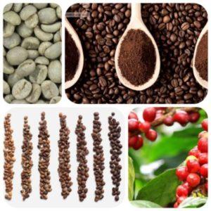 Koffie Abonnement
